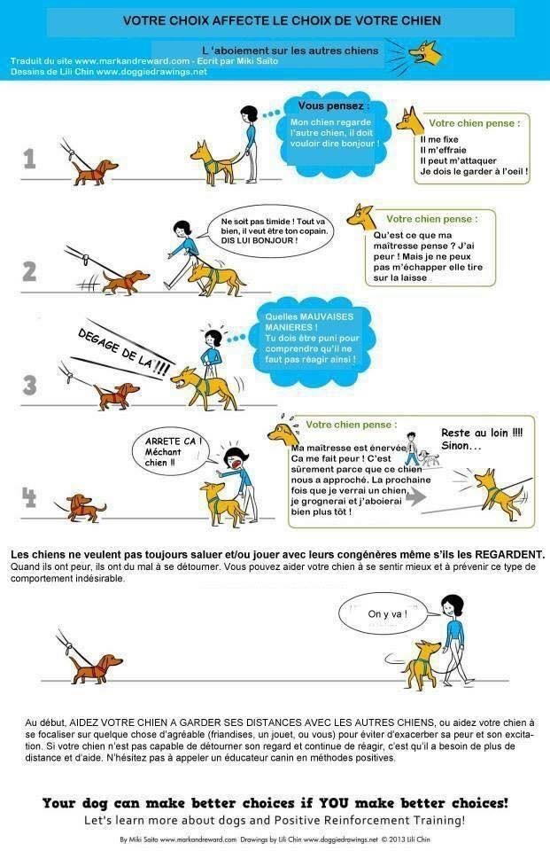 rencontres chiens