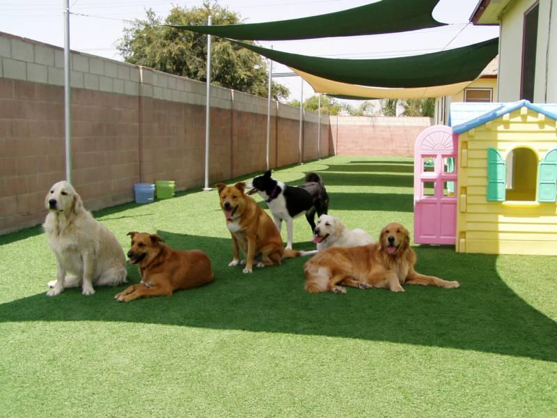 Choisir la bonne pension pour votre chien