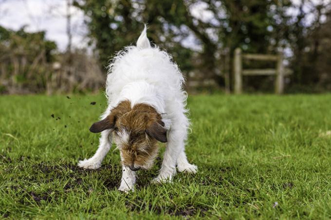 Mon chien creuse des trous quelques solutions faciles - Comment faire fuir les taupes de mon jardin ...