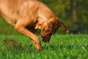 mon chien creuse des trous