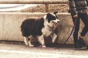 Faire de la promenade son son chien