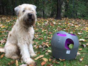 Le lance balle automatique pour chien de Petsafe