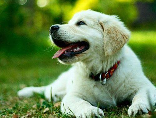 Cours d'obéissance pour chiens et chiots
