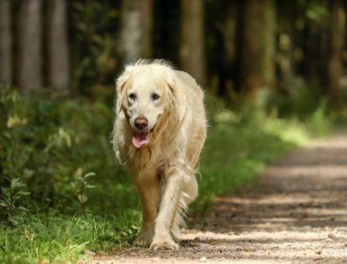 aborder un chien inconnu