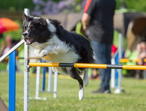 sports canins pour chien