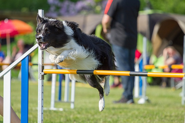 sports canins pour chien