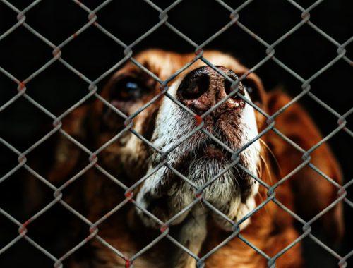 Adopter un chien de refuge, c'est sauver une vie