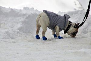 promenade en hiver avec chien bottes manteau