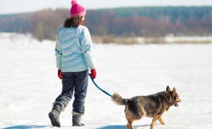 promenade en hiver avec chien