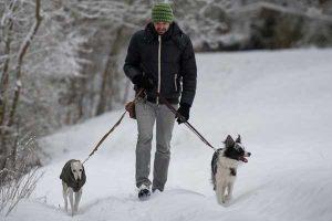 La promenade pour chien, parmi les résolutions du Nouvel An !