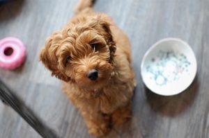 dressage chien Blainville éducateur canin