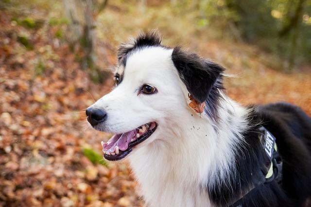 éducateur canin, dressage chien, Beauharnois