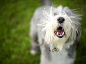 chien jappe arrêter aboiement