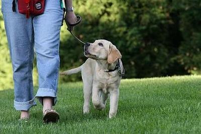 La promenade avec votre chien se doit d'être agréable pour vous et pour lui.