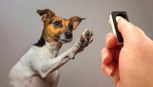 Clicker chien entraînement