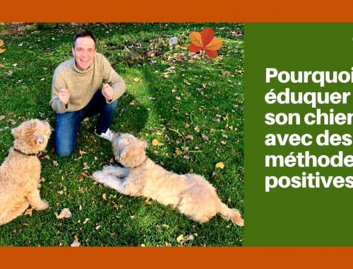 éduquer son chien en renforcement positif